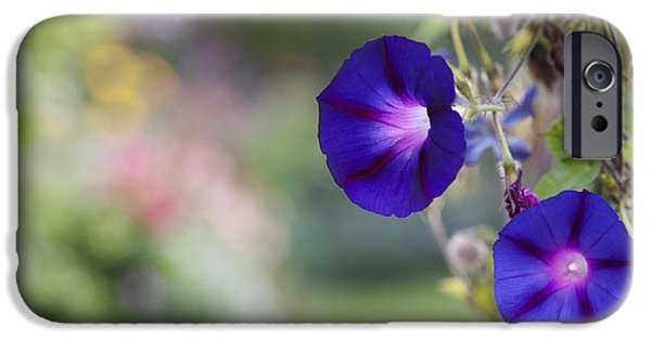 Botanical iPhone Cases - Ipomoea Morning Glory iPhone Case by Tim Gainey