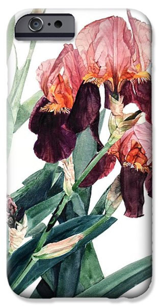 Botanic Illustration iPhone Cases - Iris La Forza del Destino iPhone Case by Greta Corens