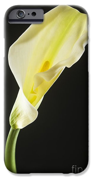 No People Pyrography iPhone Cases - Arum Lilies iPhone Case by Emirali  KOKAL