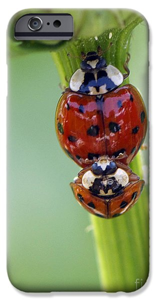 Ladybug iPhone Cases - It Takes Two iPhone Case by Sharon  Talson