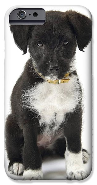 Cute Puppy iPhone Cases - Jack-a-poo Puppy iPhone Case by Gerry Pearce