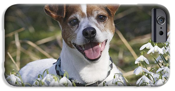 Dog Close-up iPhone Cases - Jack Russell Terrier iPhone Case by Brian Bevan