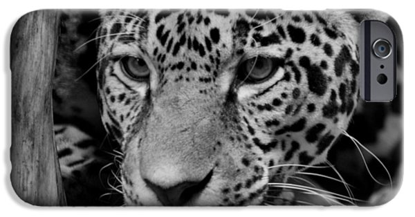 Indiana Photography iPhone Cases - Jaguar in Black and White II iPhone Case by Sandy Keeton