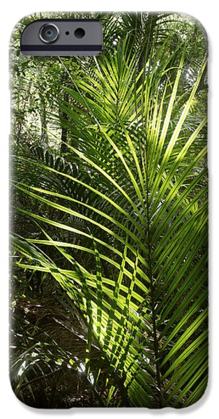 Rain iPhone Cases - Jungle ferns iPhone Case by Les Cunliffe