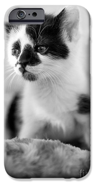 Kitten iPhone Cases - Kitten dreaming iPhone Case by Iris Richardson