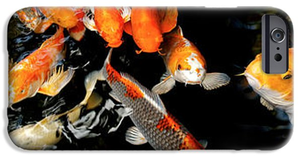 Japanese School iPhone Cases - Koi Carp Swimming Underwater iPhone Case by Panoramic Images
