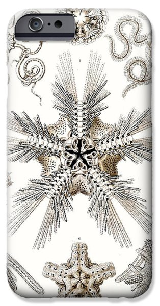 Nature Study Drawings iPhone Cases - Kunstformen der Natur iPhone Case by Ernst Haeckel
