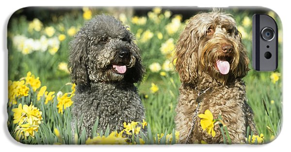 Mixed Labrador Retriever iPhone Cases - Labradoodles In Daffodils iPhone Case by John Daniels