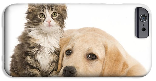 Mixed Labrador Retriever iPhone Cases - Labrador And Forest Cat iPhone Case by Jean-Michel Labat