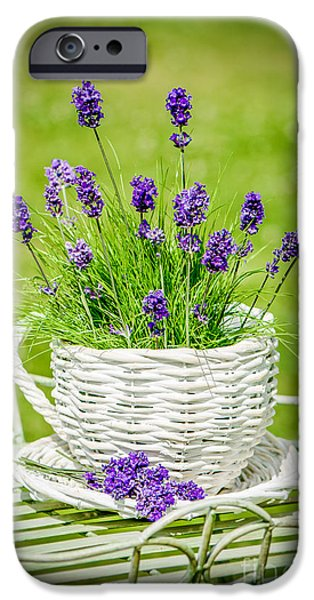 Flowerpot iPhone Cases - Lavender iPhone Case by Amanda And Christopher Elwell