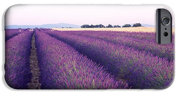 Crops iPhone Cases - Lavender Field, Plateau De Valensole iPhone Case by Panoramic Images