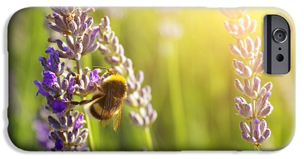 Nectar iPhone Cases - Lavender flowers iPhone Case by Carlos Caetano