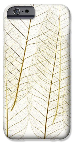 Layered Leaves iPhone Case by Kelly Redinger