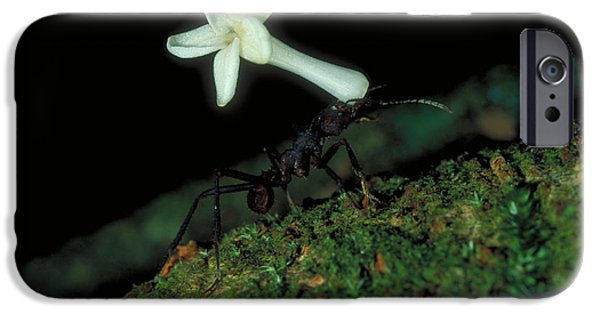 Ant iPhone Cases - Leafcutter Ant iPhone Case by Gregory G. Dimijian