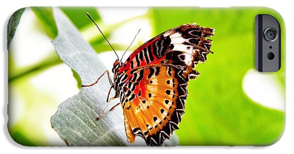 Antenna iPhone Cases - Leopard Lacewing butterfly iPhone Case by Jane Rix