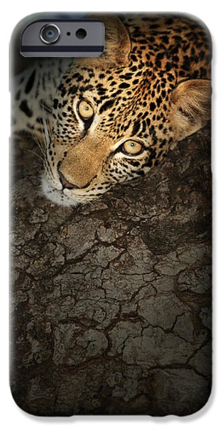 Species iPhone Cases - Leopard Portrait iPhone Case by Johan Swanepoel