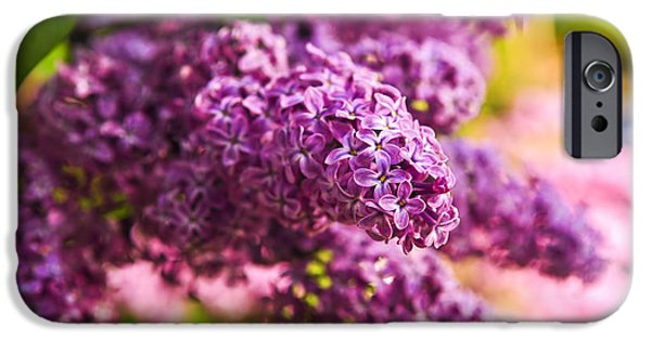 Lilac Flower iPhone Cases - Lilacs iPhone Case by Elena Elisseeva