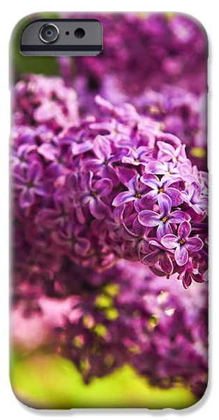 Lilacs iPhone Case by Elena Elisseeva