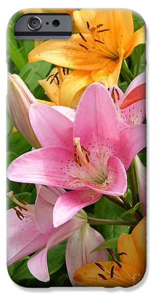 Limelight iPhone Cases - Lilies Lilium Sp iPhone Case by Tony Craddock