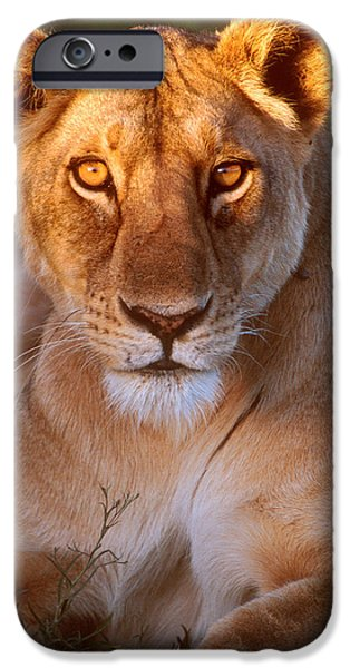Face Recognition iPhone Cases - Lioness Tanzania Africa iPhone Case by Panoramic Images