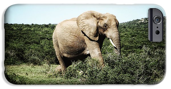 Elephants Photographs iPhone Cases - Lonely Giant iPhone Case by Ryan Wyckoff