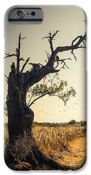 Fall Scenes iPhone Cases - Lonely Tree iPhone Case by Carlos Caetano