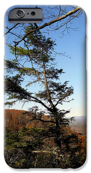 River View iPhone Cases - Lonesome Pine iPhone Case by Skip Willits