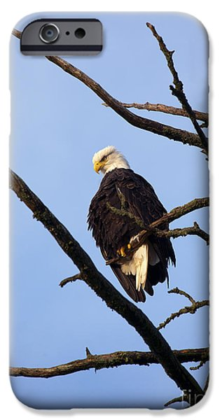 Eagle Photographs iPhone Cases - Looking Down on the World iPhone Case by Mike  Dawson