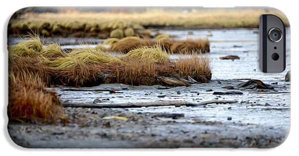 Fall iPhone Cases - Low Tide iPhone Case by Michael Seemann