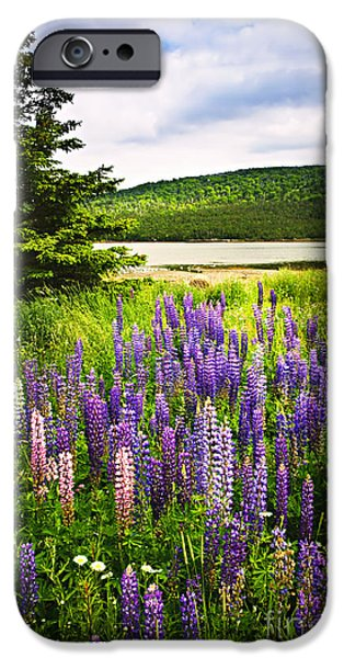 Hill iPhone Cases - Lupin flowers in Newfoundland iPhone Case by Elena Elisseeva