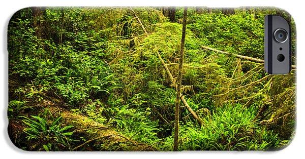 Rainforest iPhone Cases - Lush temperate rainforest iPhone Case by Elena Elisseeva