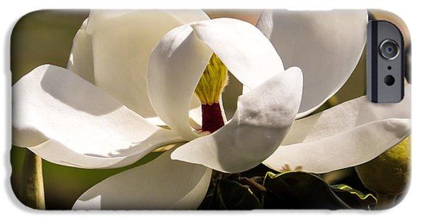 Magnolia iPhone Cases - Magnolia iPhone Case by Zina Stromberg