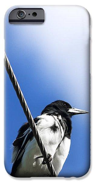 Magpies iPhone Cases - Magpie Up High iPhone Case by Ryan Jorgensen