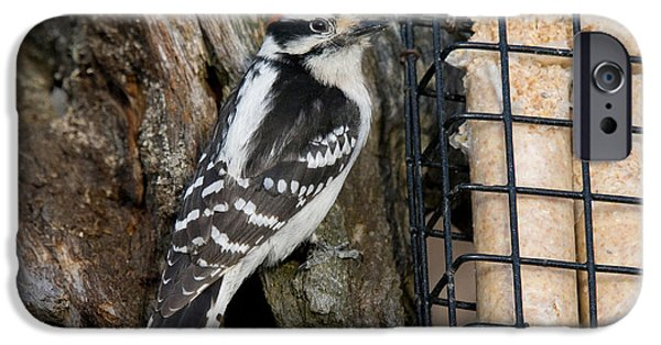 Hairy Woodpecker iPhone Cases - Male Hairy Woodpecker iPhone Case by Linda Freshwaters Arndt