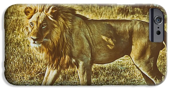 Large Cats iPhone Cases - Male Lion  iPhone Case by Pixabay
