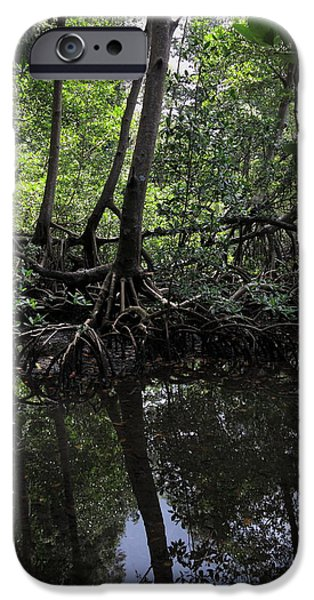 Mangrove Forest iPhone Cases - Mangrove forest in Los Haitises National Park Dominican Republic iPhone Case by Andrei Filippov