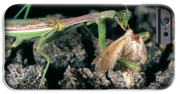 Mantodea iPhone Cases - Mantis Eating Moth iPhone Case by Gregory G. Dimijian, M.D.