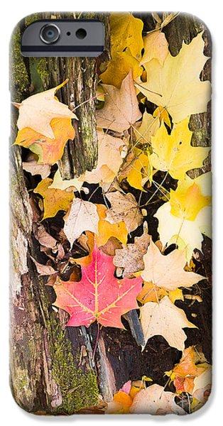 Maple leaves iPhone Case by Steven Ralser