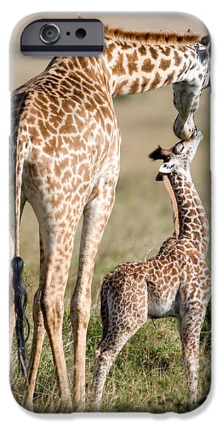 Wild Animals iPhone Cases - Masai Giraffe Giraffa Camelopardalis iPhone Case by Panoramic Images