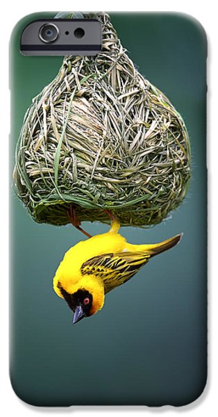 Fauna iPhone Cases - Masked weaver at nest iPhone Case by Johan Swanepoel