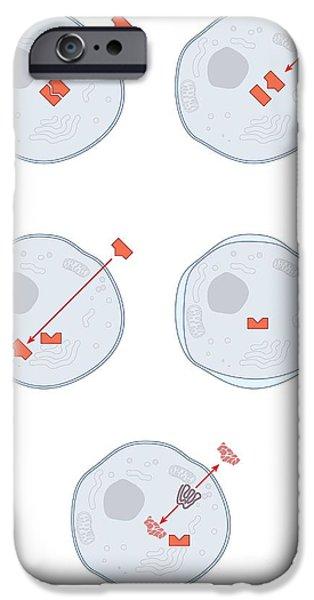 Mechanism iPhone Cases - Mechanisms Of Antibiotic Resistance iPhone Case by Peter Gardiner