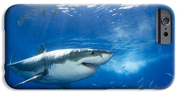 Dave iPhone Cases - Mexico, Great White Shark Carcharodon iPhone Case by Dave Fleetham