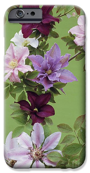 Nike iPhone Cases - Mixed Clematis Flowers iPhone Case by Archie Young