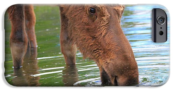 Moose In Water iPhone Cases - Moose In Water iPhone Case by Dan Sproul