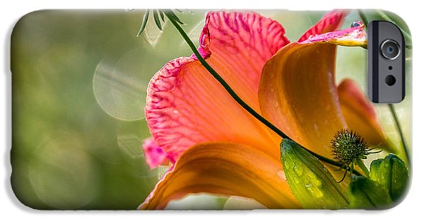 iPhone Cases - Morning Has Broken iPhone Case by Mary Amerman