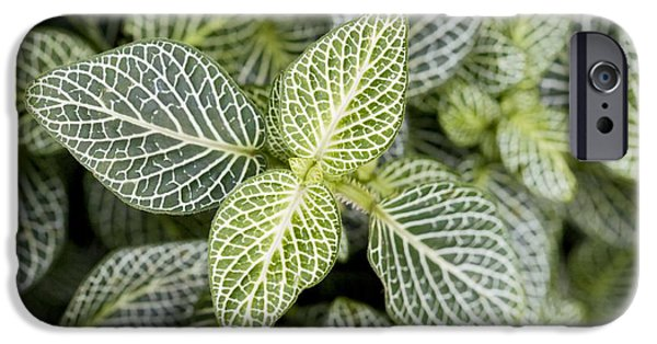 Mosaic iPhone Cases - Mosaic Plant Fittonia Albivenis Leaves iPhone Case by Jon Stokes