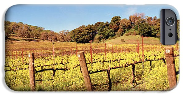 Field. Cloud iPhone Cases - Mustard Flowers In A Field, Napa iPhone Case by Panoramic Images