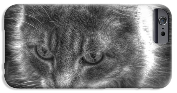 Fauna Pyrography iPhone Cases - My cat iPhone Case by Yury Bashkin