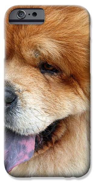 Cora Wandel iPhone Cases - My Friend Chow iPhone Case by Cora Wandel