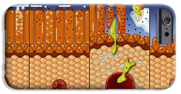 Mucosa iPhone Cases - Nasal Mucosa, Artwork iPhone Case by Art for Science